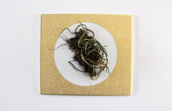 Andrea Guerzoni, Lichene, 2017, reperto naturale (Hiroshima, Giappone, 2016), cartoncino, plexiglass 14x12,5 h. 15 cm